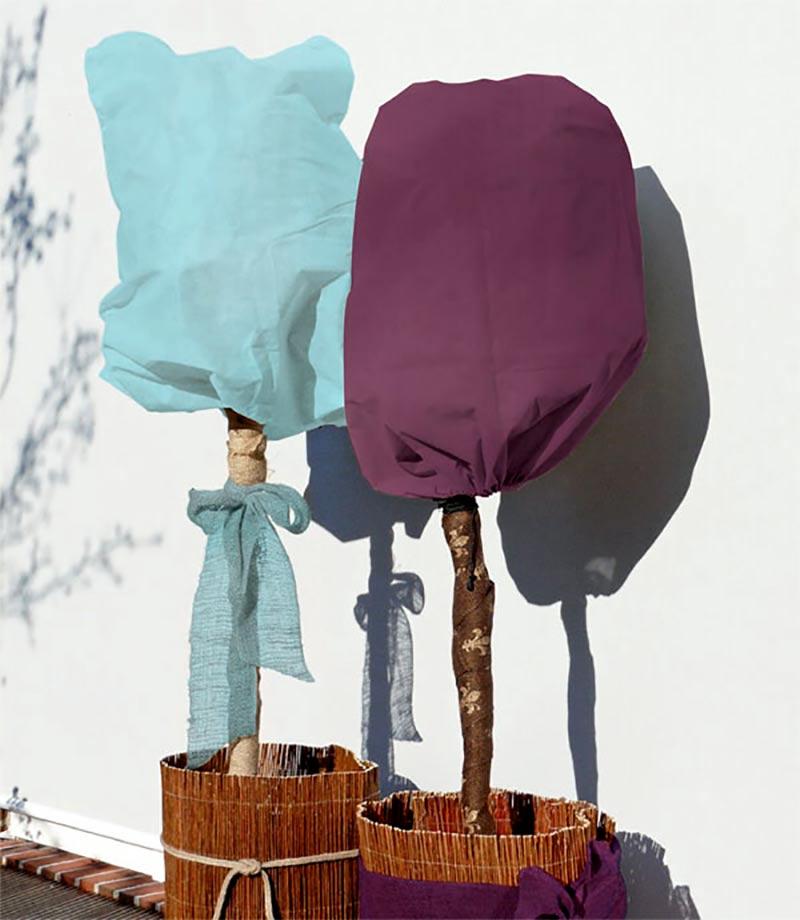 Fiberdukshuvor skyddar känsliga kronor från vinterns kyla