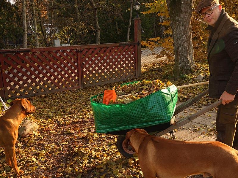 kratta och städa i trädgården i november