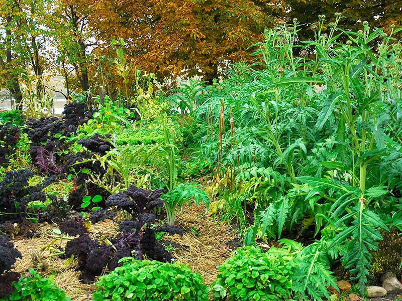 Köksträdgård enligt permakultur