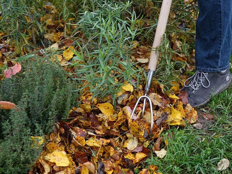 Löv som marktäckning i odlingsbädd