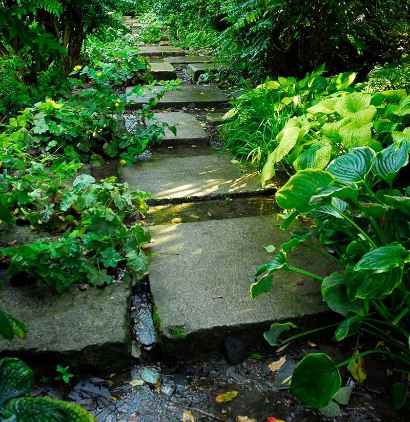 Bäck I trädgård med stenar som gångplattor