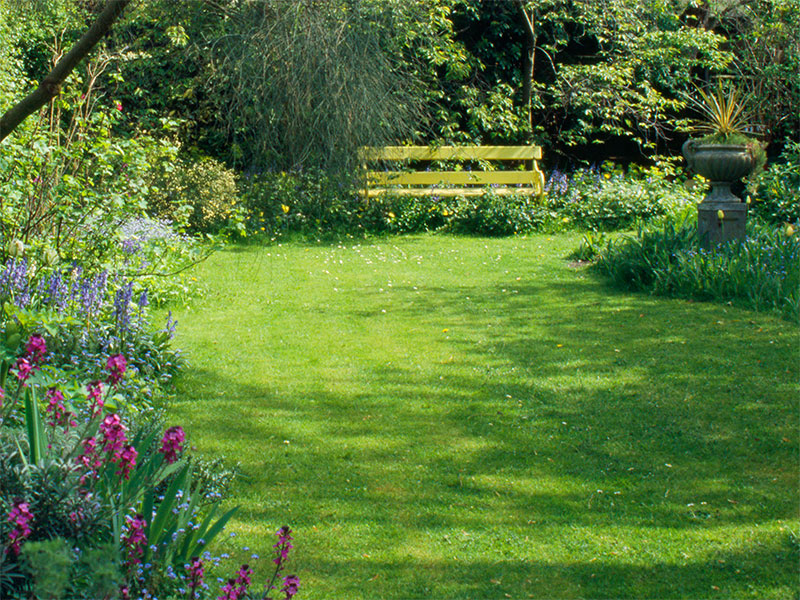 Fin gräsmatta i trädgård