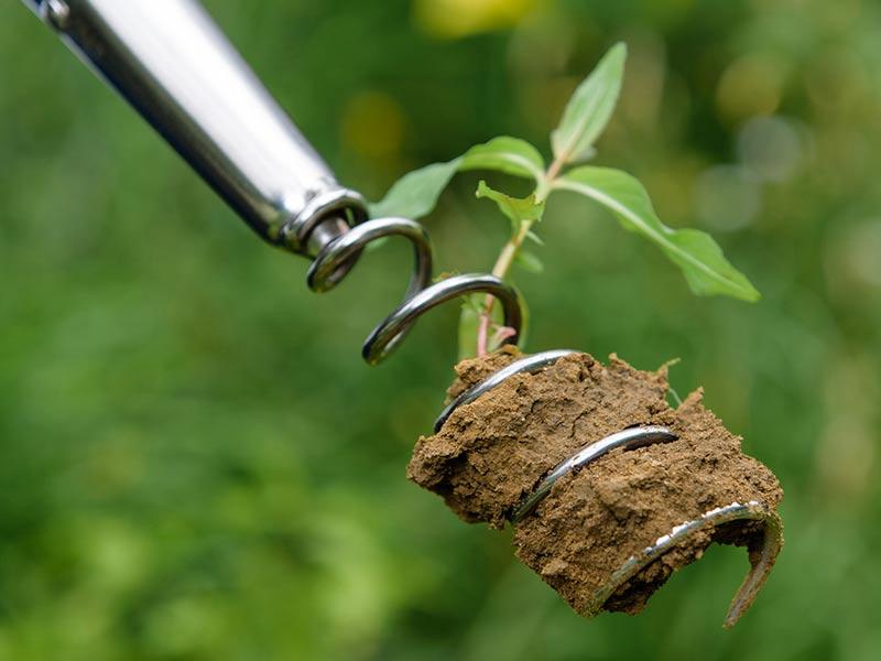 ogräsrensning med korkruv för långa rötter