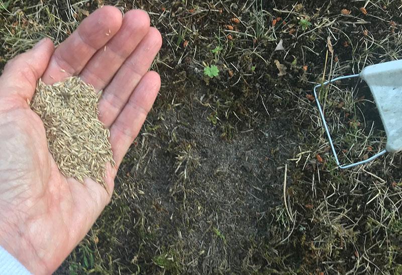 Stödsådd av gräsmatta