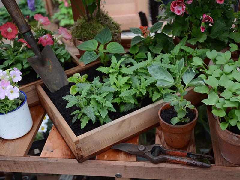 Växter förökade med sticklingar