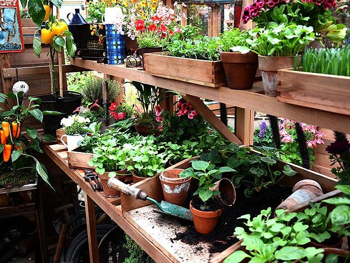 odling och förökning av trädgårdsväxter i växthus