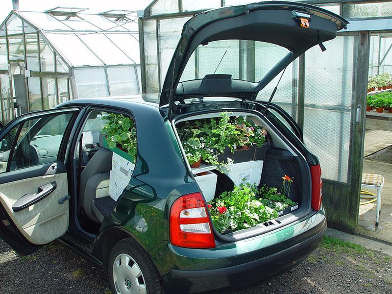 Resa med växter i bil