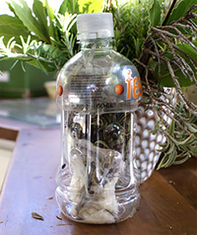 Frakt av sticklingar i PET-flaska
