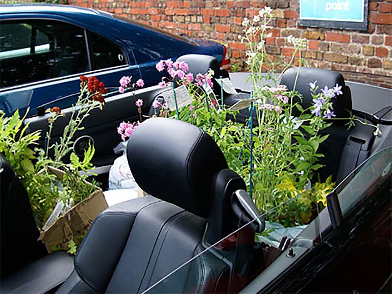 Växter i baksätet på en bil vid resa i England