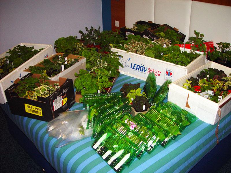 Frigolitlådor för packning av många växter på flyg