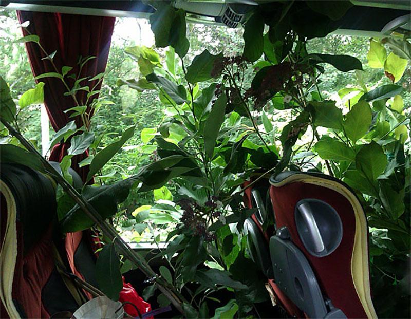Resa med stora växter i buss