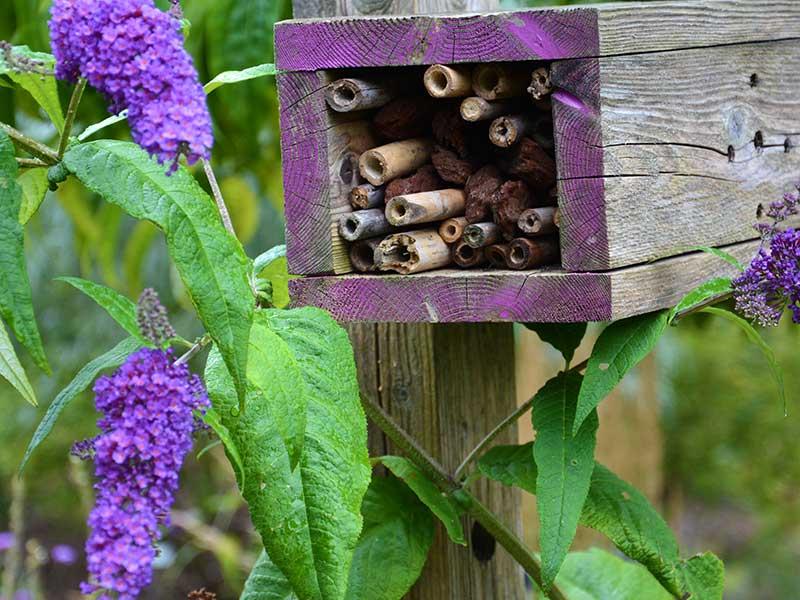 Insektshotell av bambupinnar till pollinerande insekter