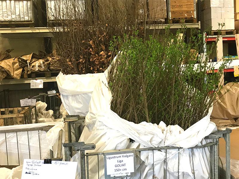 Leverans av växter med posten