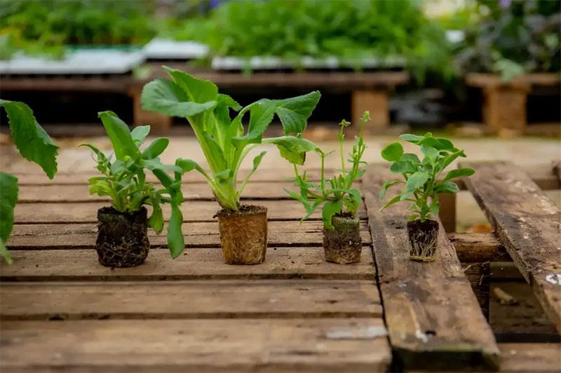 Pluggplantor i olika storlek