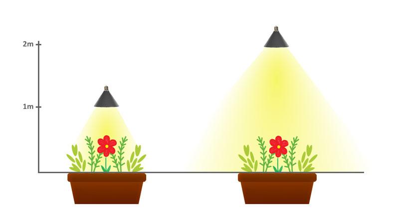 Spridning av växtlampa beroende på avstånd till växten