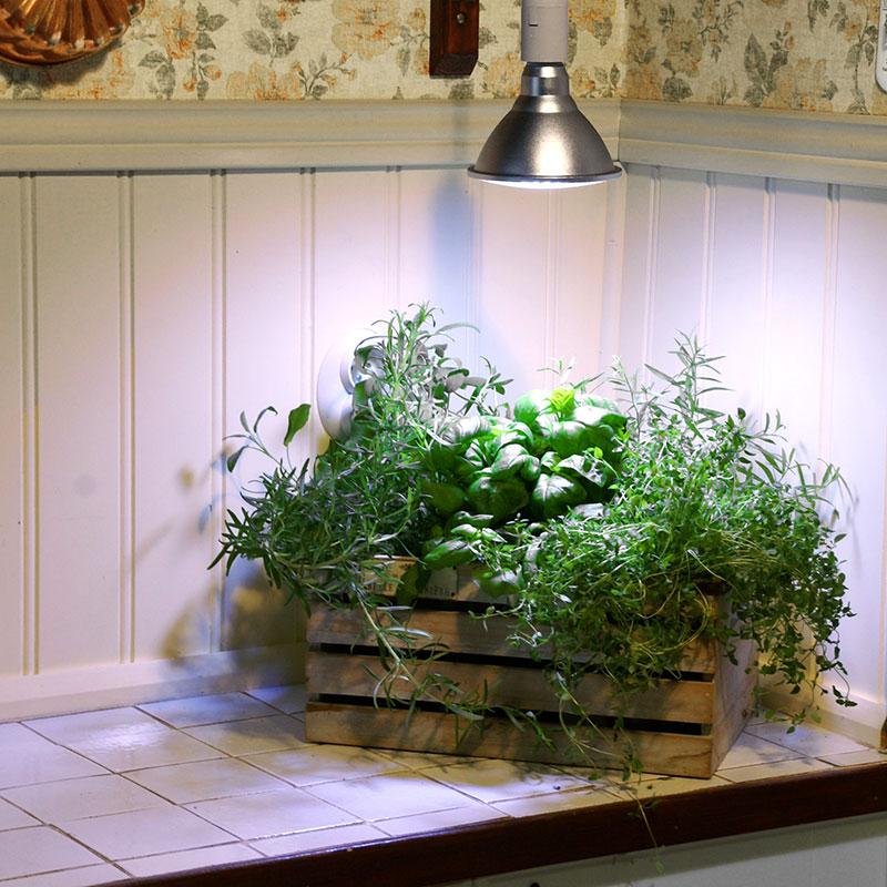 primula växtlampa från wexthuset i köket med kryddörter