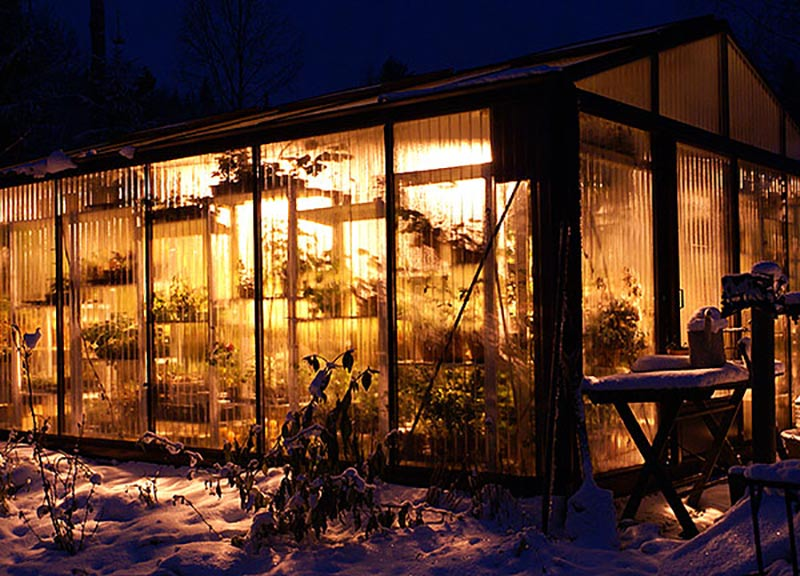 VInter i växthuset med växtlampa