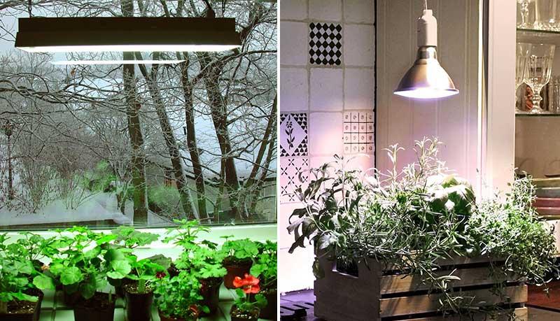 Växtbelysning – så mäts ljus för växtlampa | Wexthuset