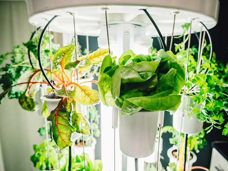 lysrör som växtbelysning i hydrokultur