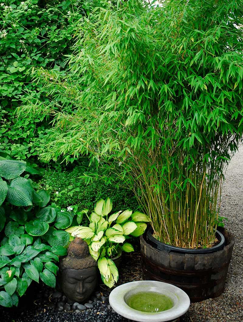 Krukodlad bambu i trädgård