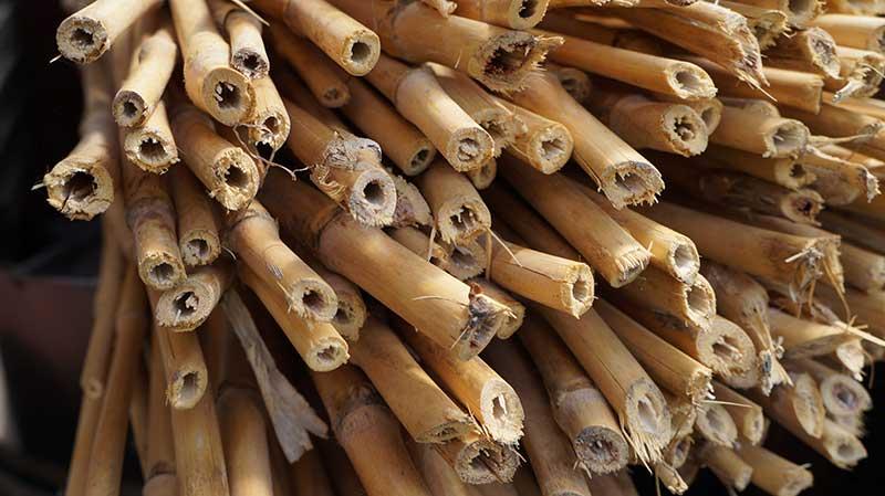 Bambupinnar som insektshotell