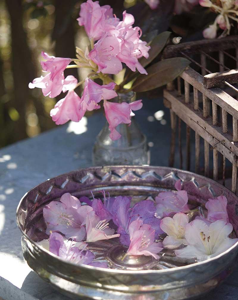 Rododendron som snittblomma
