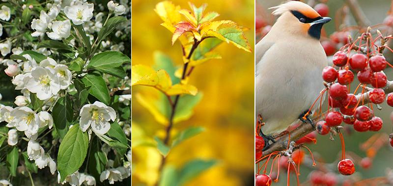 Bukettapel med blomma, höstblad och bär