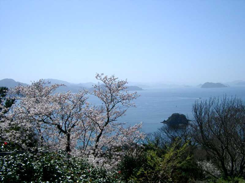 Vildväxande japanskt körsbärsträd