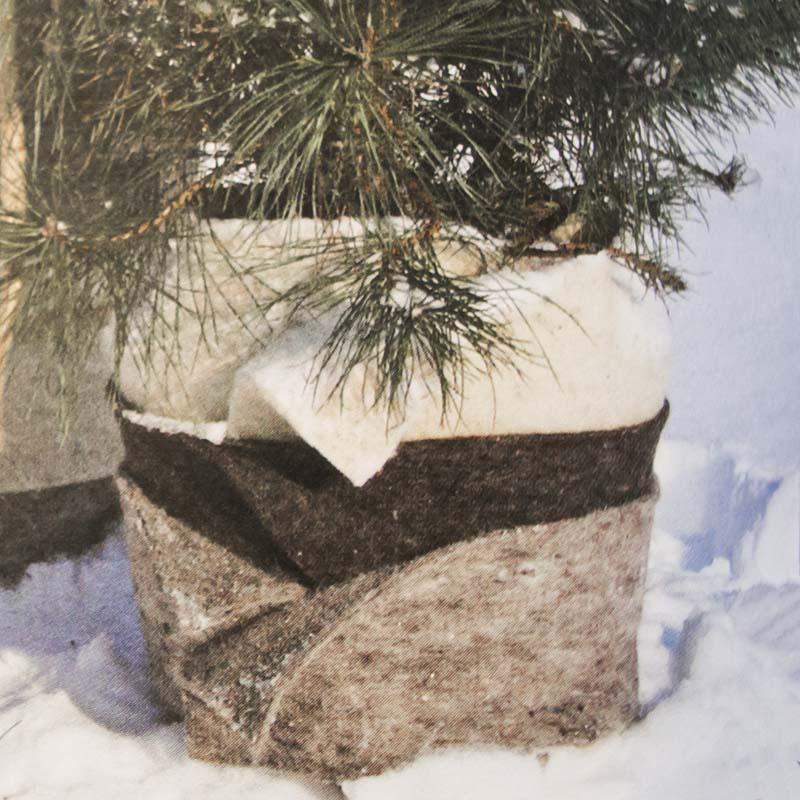 Vinterskydd av kruka i fårull