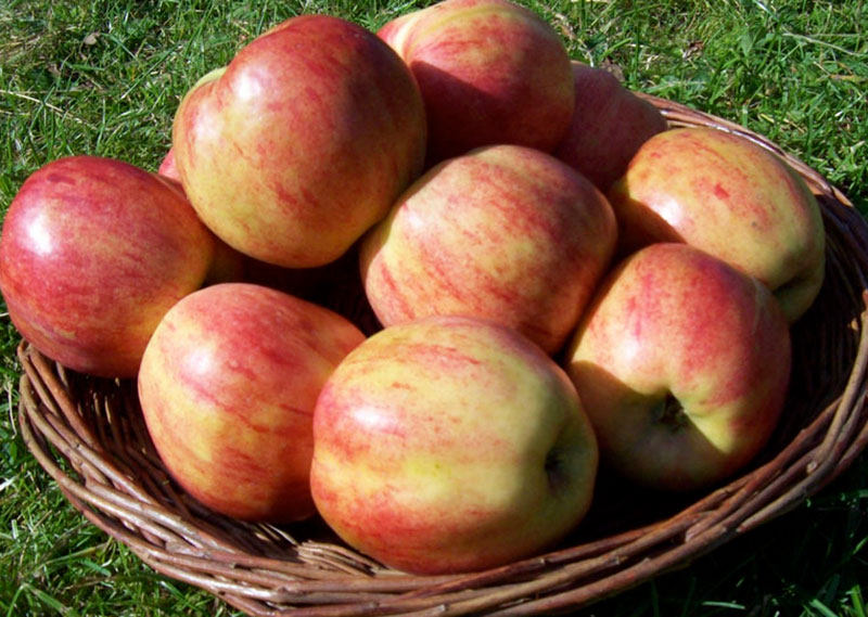 Äppelsort Gravenstein
