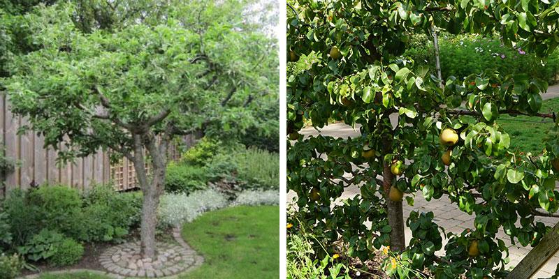 Så här planterar du fruktträd