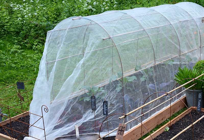 Odlingsduk för odling av broccoli