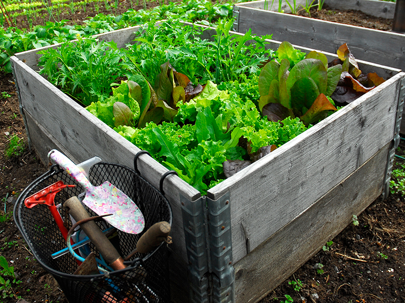 Grönsaksodling i pallkrage