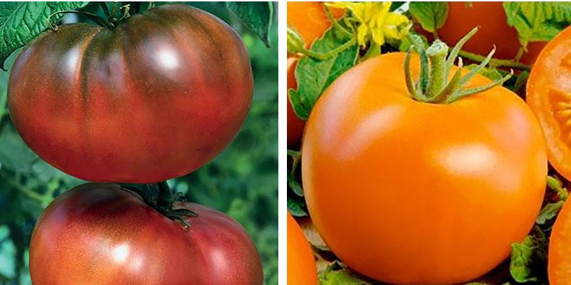 Tomat Noire de Crimee och Polfast