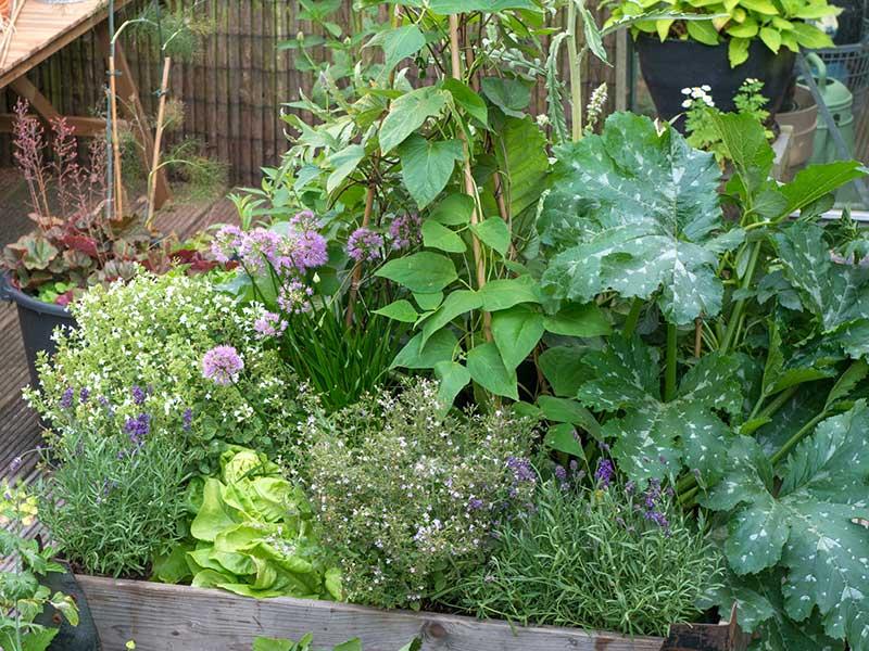 Pallkrage med lavendel och grönsaker