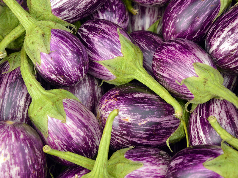 Hemodlad lila och vit aubergin