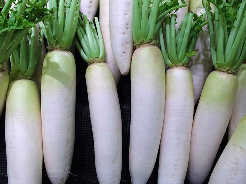 Rättika med vita, långa rötter
