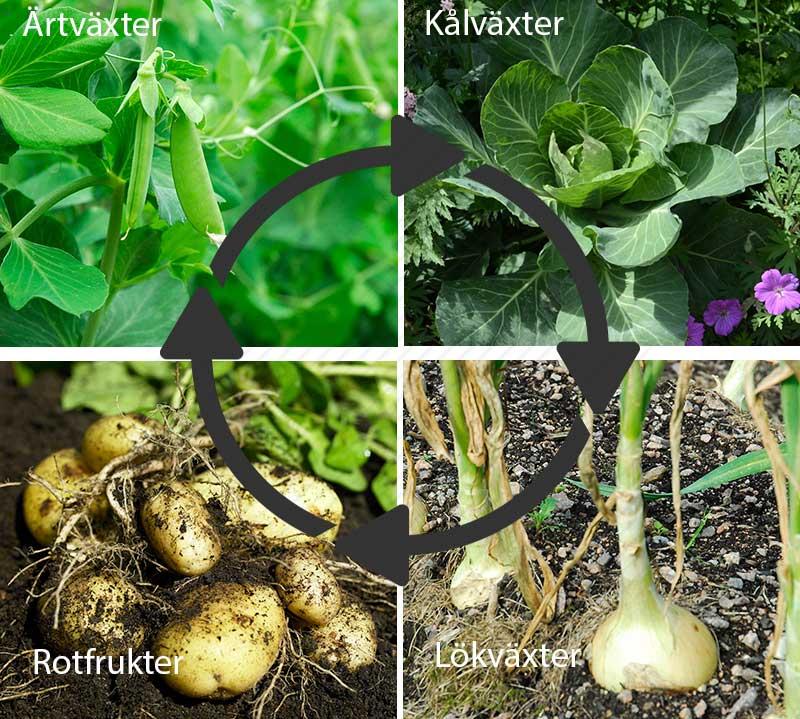 Växtföljd i köksland med grönsaker