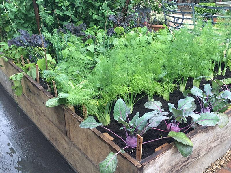 Köksväxter odlade i pallkrage
