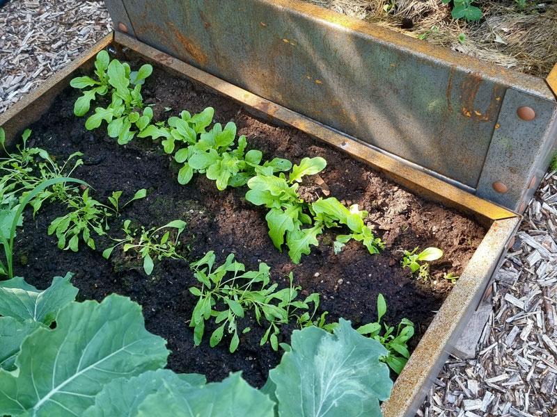 Balkongodling med grönsaker att skörda i omgångar