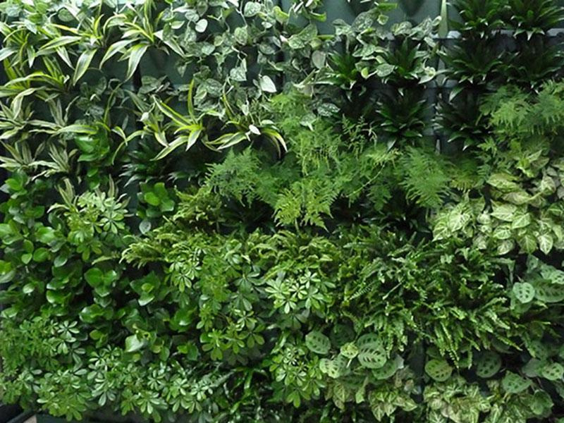 Växtvägg med gröna växter