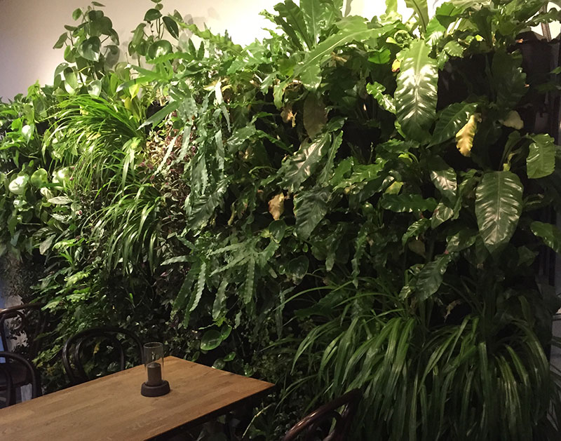 Växtvägg med skuggtålig krukväxter och belysning