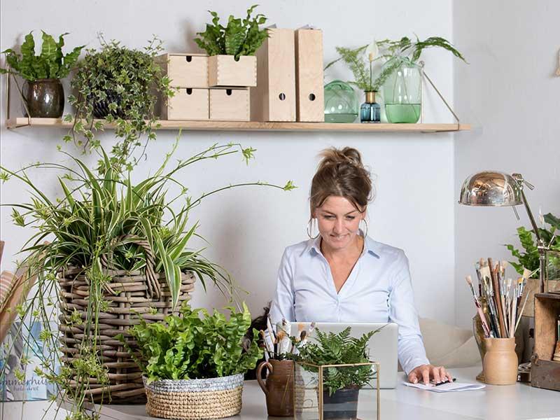 Mörkertåliga krukväxter till hemmakontor