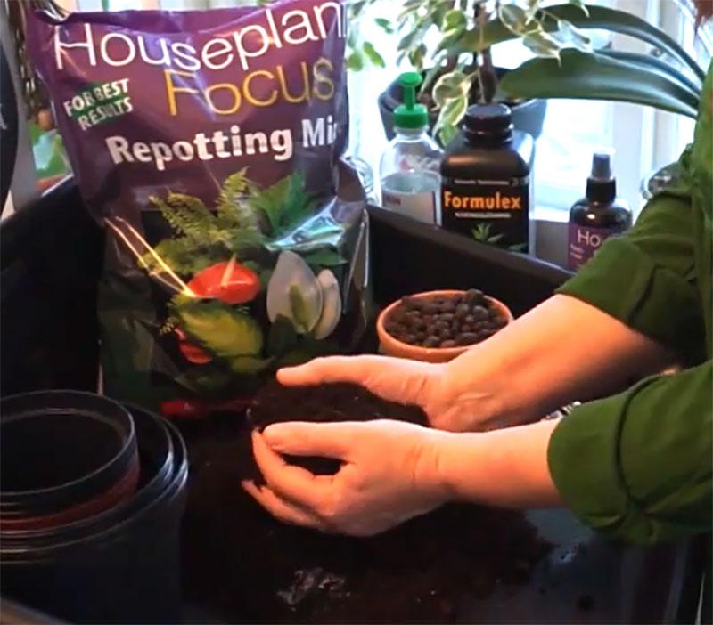 Förberedelse för omplantering av krukväxter