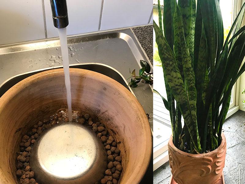 fuktmagasin till gröna krukväxter