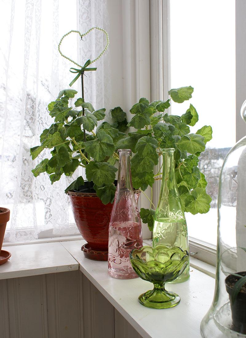 Vattenflaskor vid växterna ger högre luftfuktighet