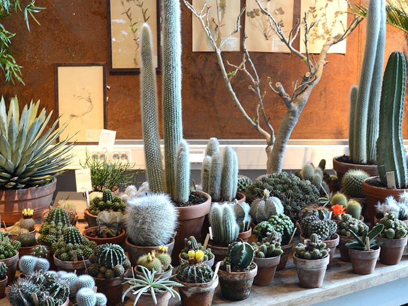 Bord med olika kaktusar