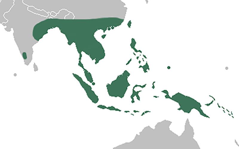 geografiskt utbredningsområde för Paphiopedilum venussko