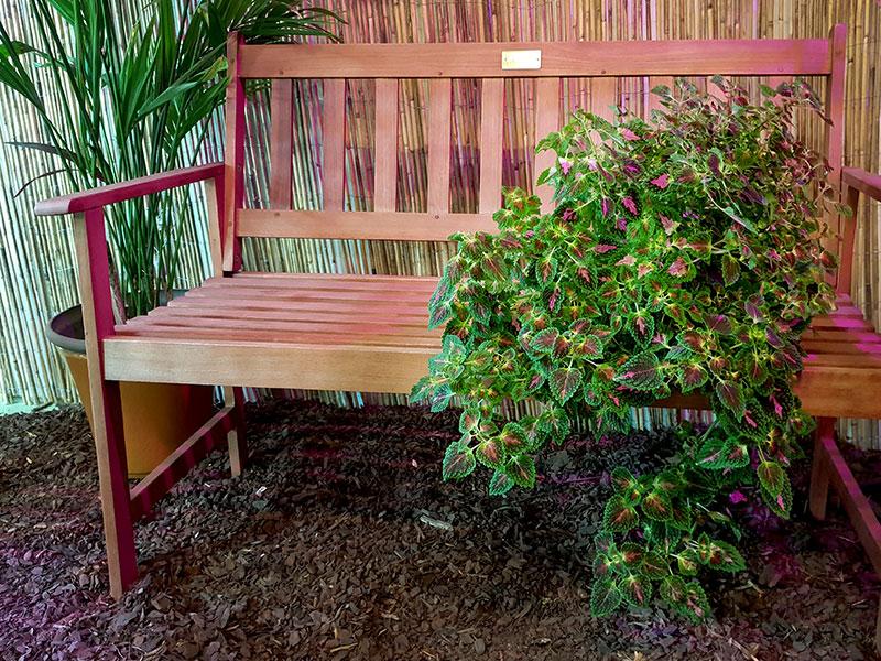 Palettblad med rosa-gröna hängande blad på bänk