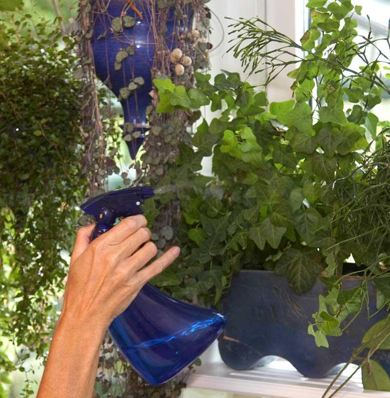Dusch av gröna krukväxter för ökad luftfuktighet